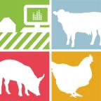 logo consulting animal feed alimentation animale